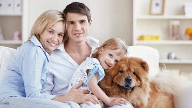 Wills & Trusts dog-young-family Direct Wills Stratford